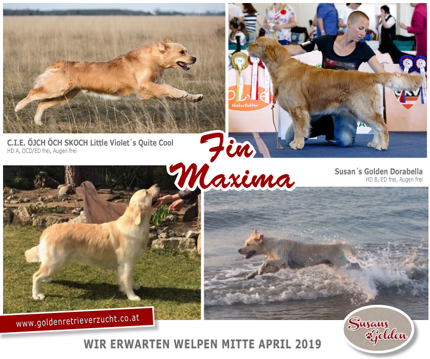 wurf-fin_maxima_2019